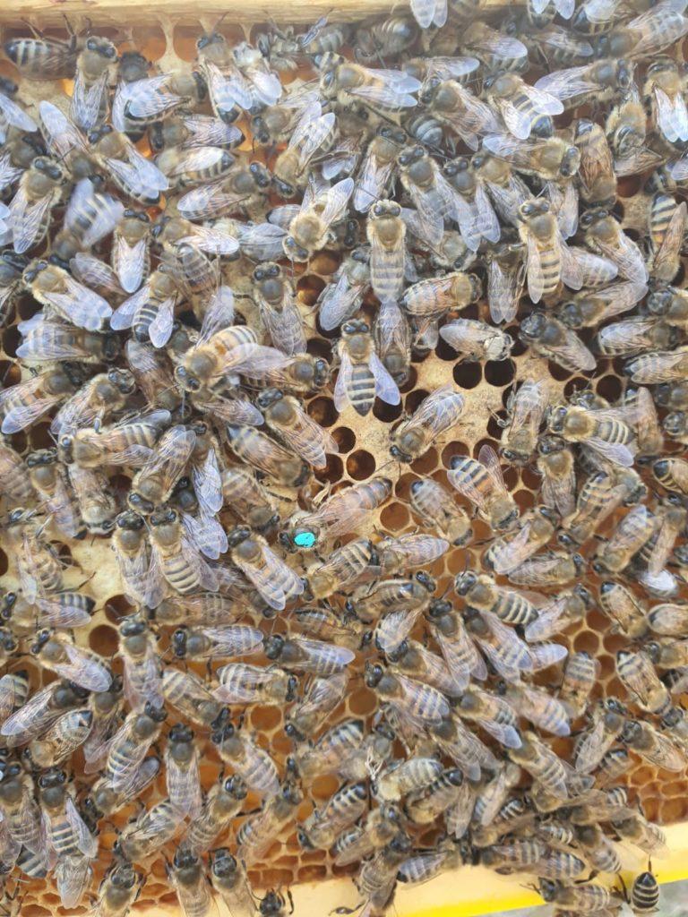 Bild på våra bin